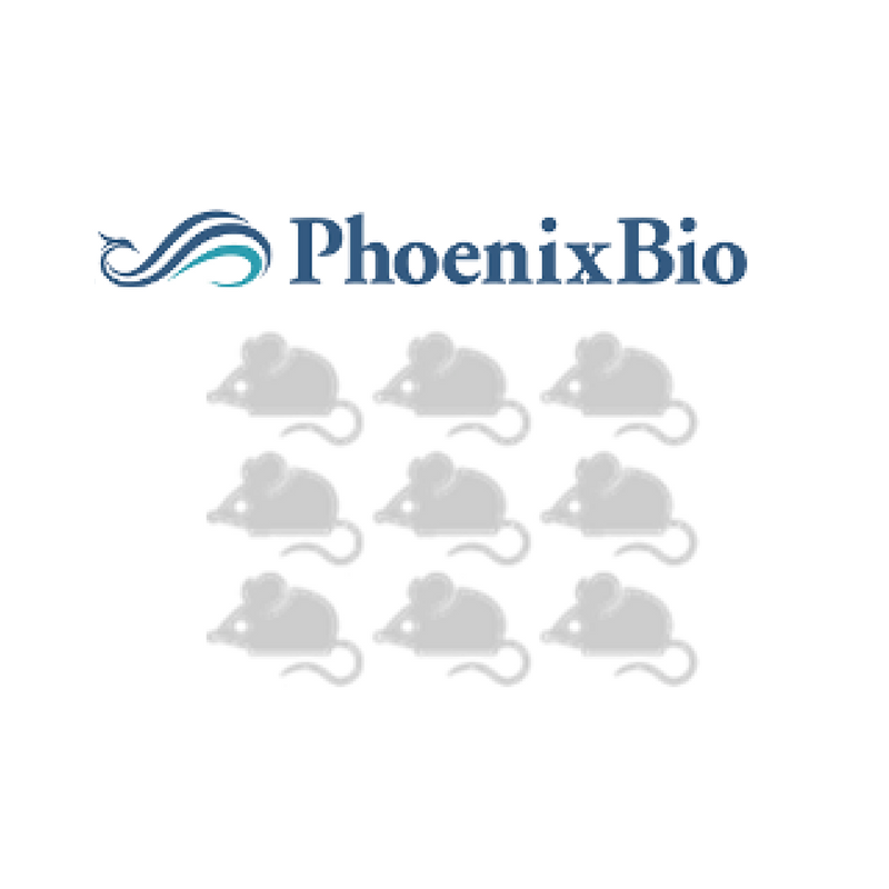 KMT Hepatech Announces Strategic Investment from PhoenixBio