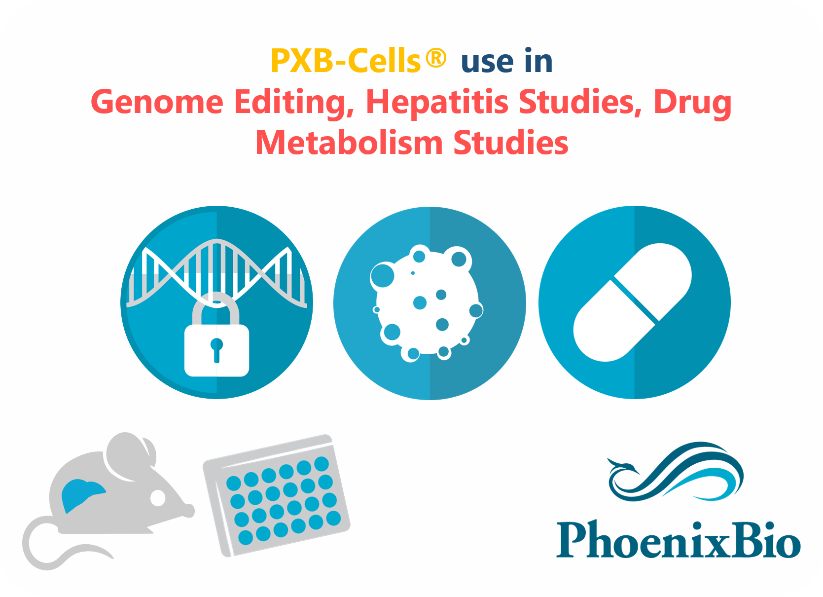 PXB cells in gene editing, metabolites identification, hepatitis