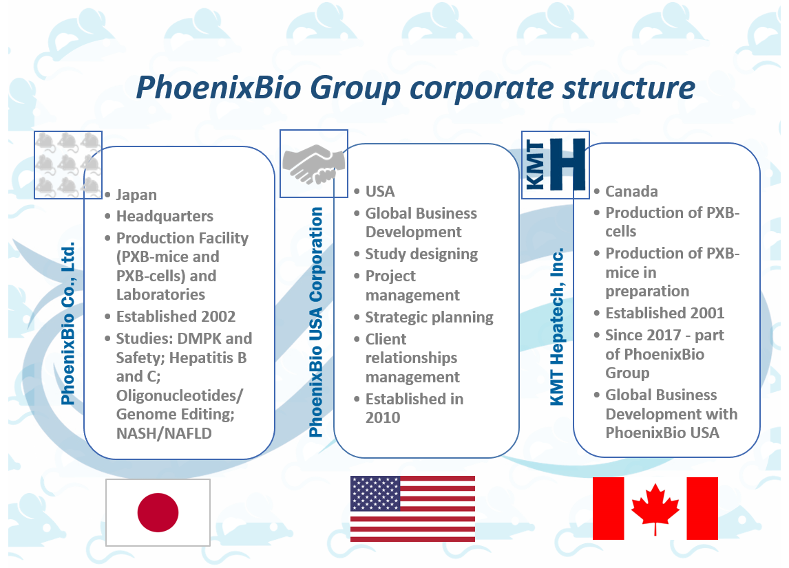 PhoenixBio Corporate Structure