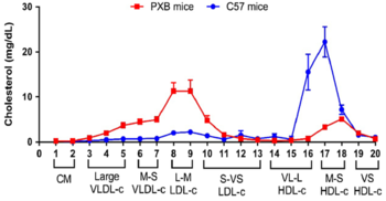 Human-like lipoprotein profile in PXB-mouse