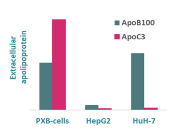 Humanized lipoprotein profile of PXB-cells – human hepatocytes