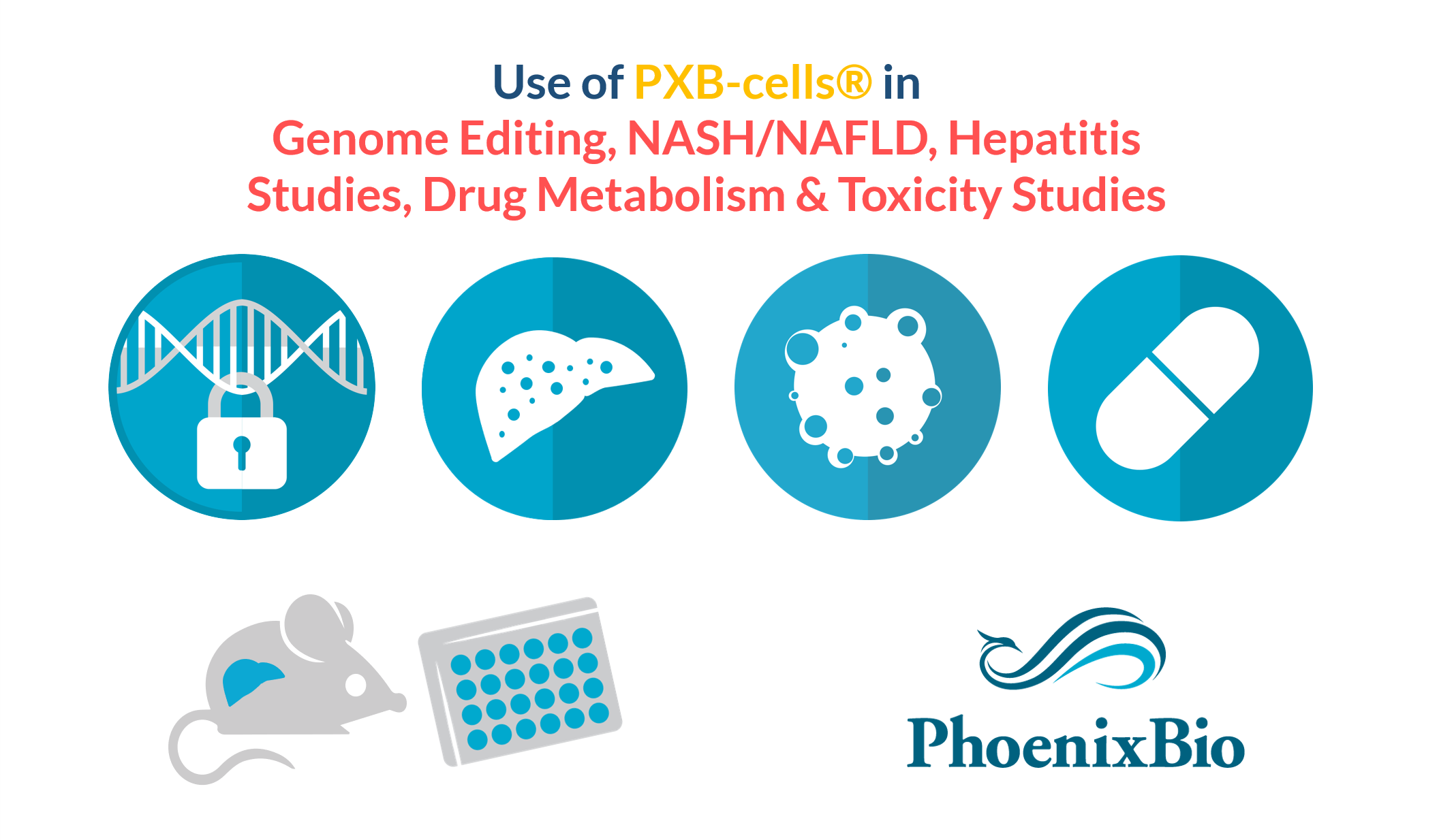 Use of PXB-cells in DMPK-Toxicity, Hepatitis Studies, NASH-NAFLD, Gene Editing