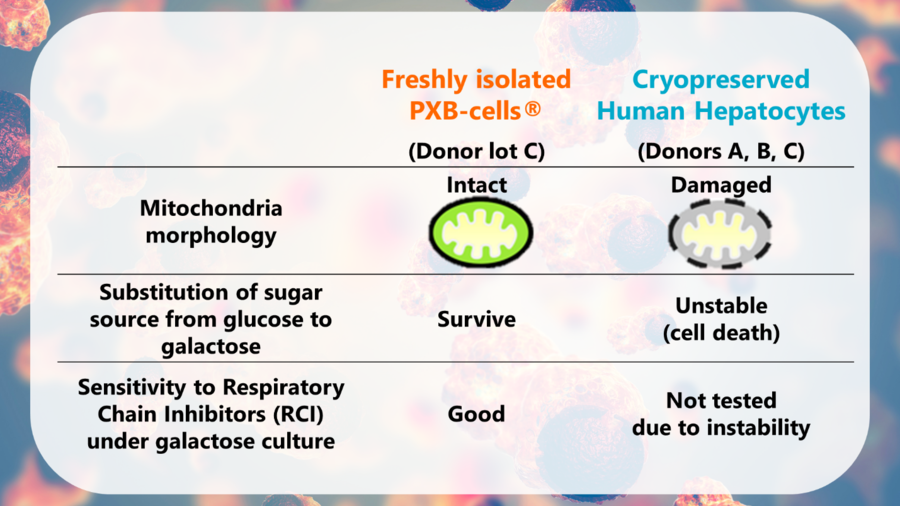 Mitochondrial toxicity in PXB-cells®