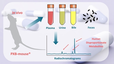 Analysis of PXB-mice in vivo – radiochromatograms of plasma, urine, bile and feces