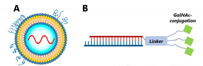Graphic example of LNP-encapsulated mRNA (A) and GalNAc-conjugated siRNA (B)