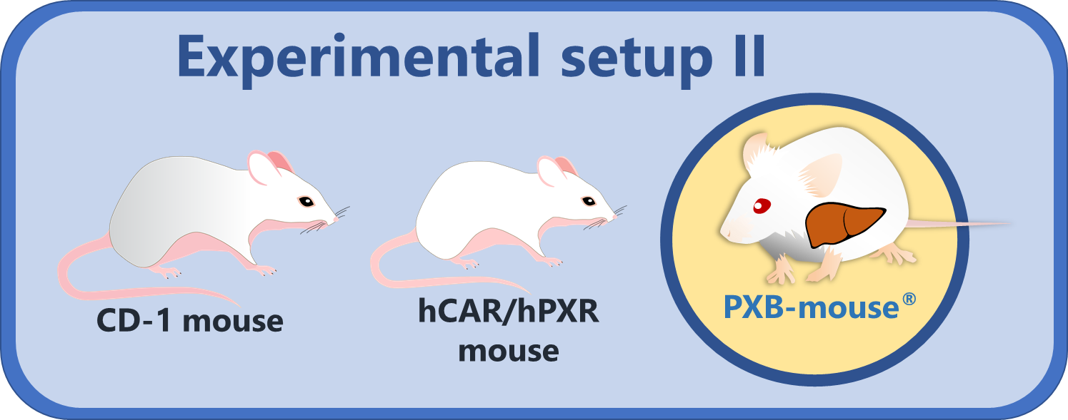 Phenobarbital_Hepatic_Effect_PXBmouse_3models