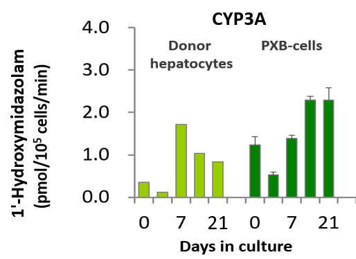 Figure 2. CYP3A4 activity of PXB-cells measured using midazolam as a substrate and compared to the initial donor's human hepatocytes. Image is from PhoenixBio's in-house data.